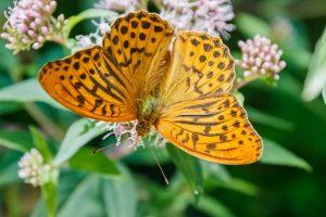 butterfly-1620391_1920